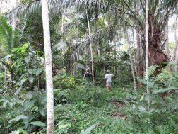 5-jaar-oude-plantage regenwoud