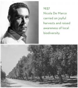 Nicola de Marco 1937
