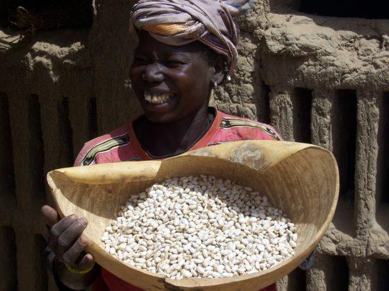 oogst klimaatnoten mali