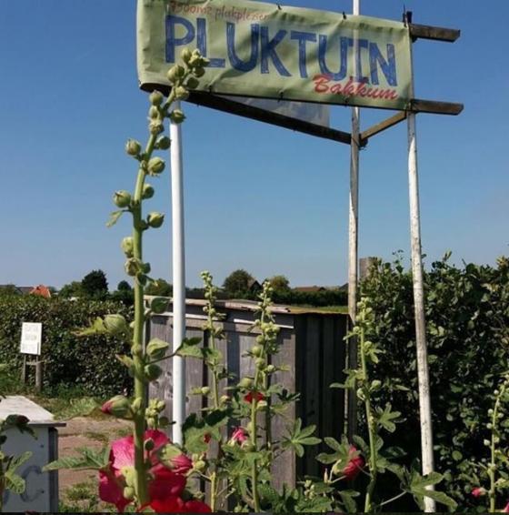 bloemenpluktuin bakkum